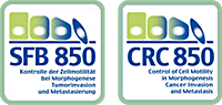 CRC 850 Control of Cell Motility in Morphogenesis, Cancer Invasion and Metastasis